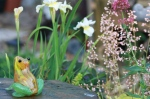 glas frog