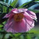 images-wind-chimes-peony