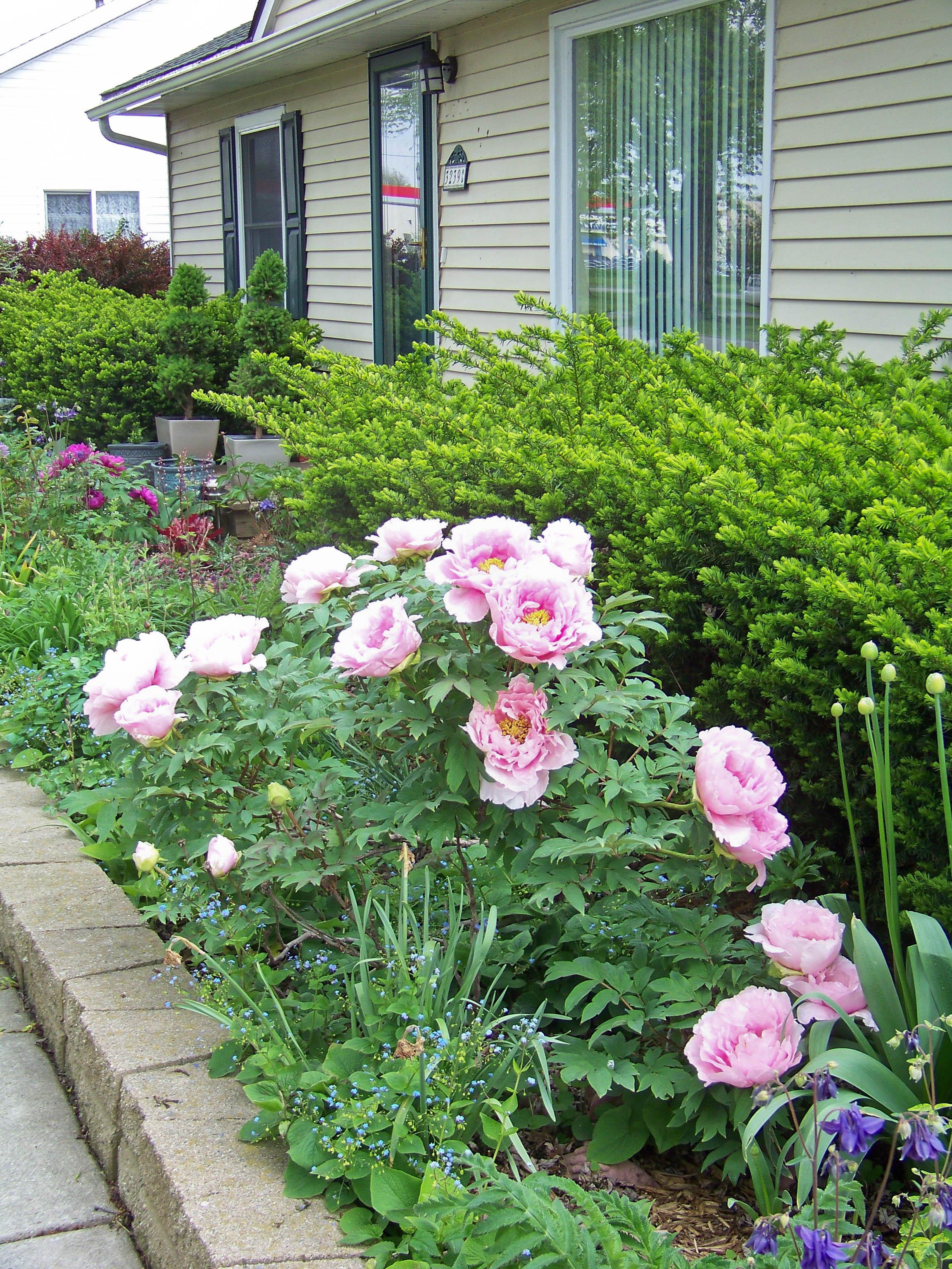 trees and shrubs monroe county master gardener association