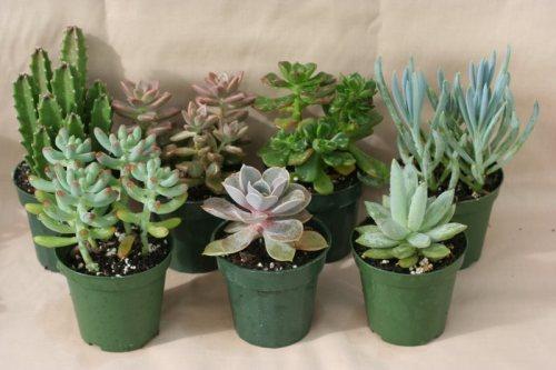 Succulents-Indoor-House-Plants