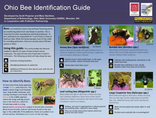 Bee  Guide 1