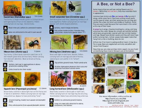 Bee Guide 2