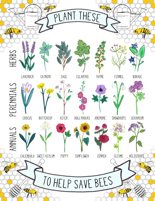 plant-these-to-save-the-bees
