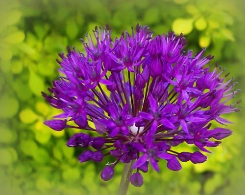 Linda's Flower